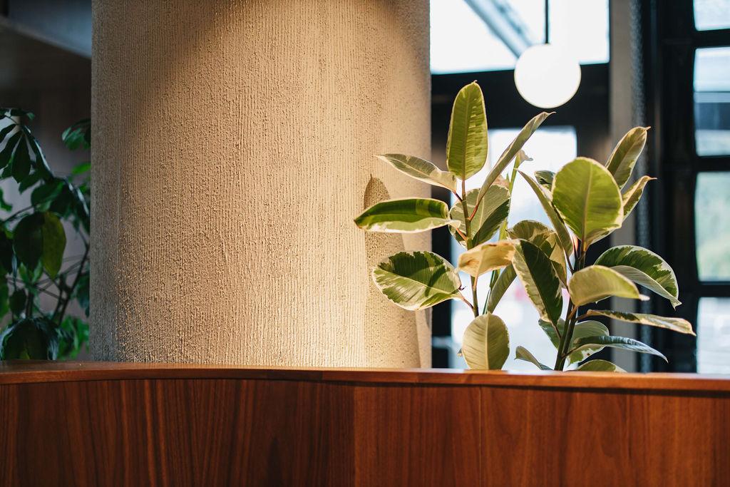 Venetial plaster in North Vancouver at Bufala Restaurant - Commercial Interior Venetian Plaster